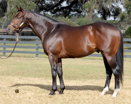 High Cotton - Sire of a $600,000 OBS Two-Year-Old!