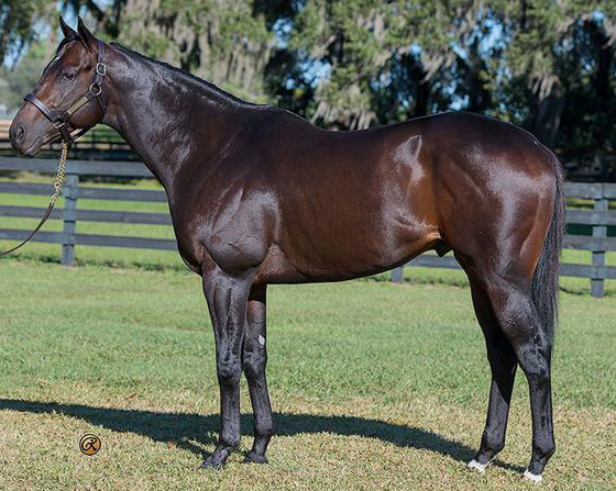 Prospective - MULTIPLE GSW OF $719,130 BY MALIBU MOON