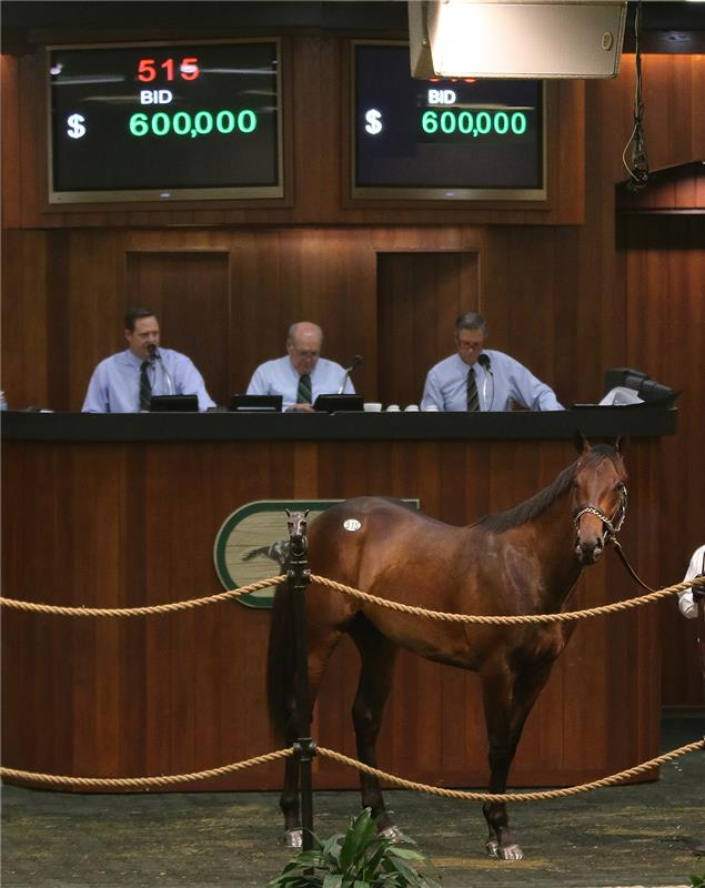 Adios Charlie colt Hip 515 OBS March 2015