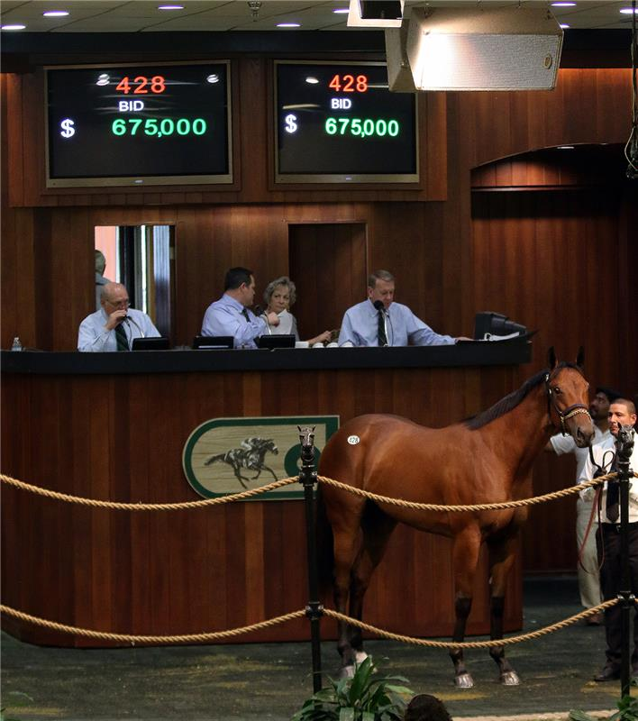 Adios Charlie filly Hip 428 OBS March 2015