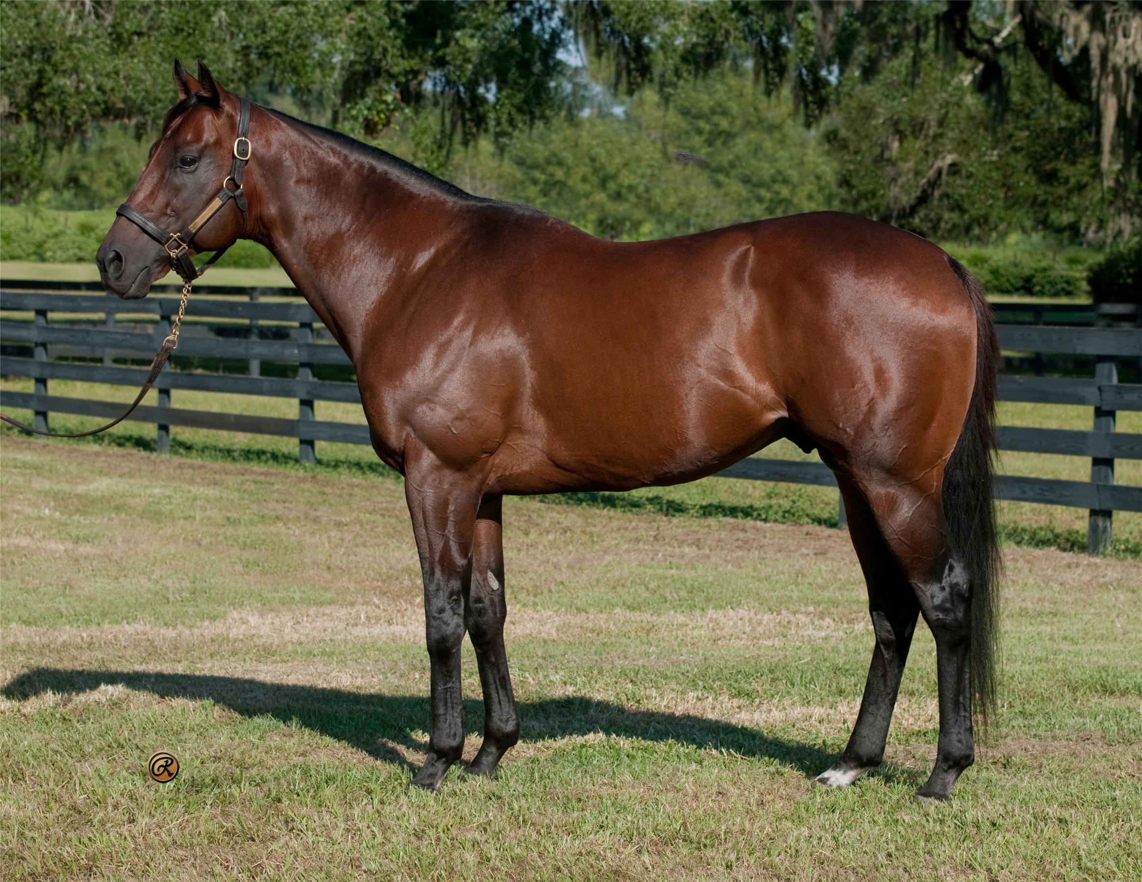 Prospective - Ocala Stud Thoroughbred Stallion Farm