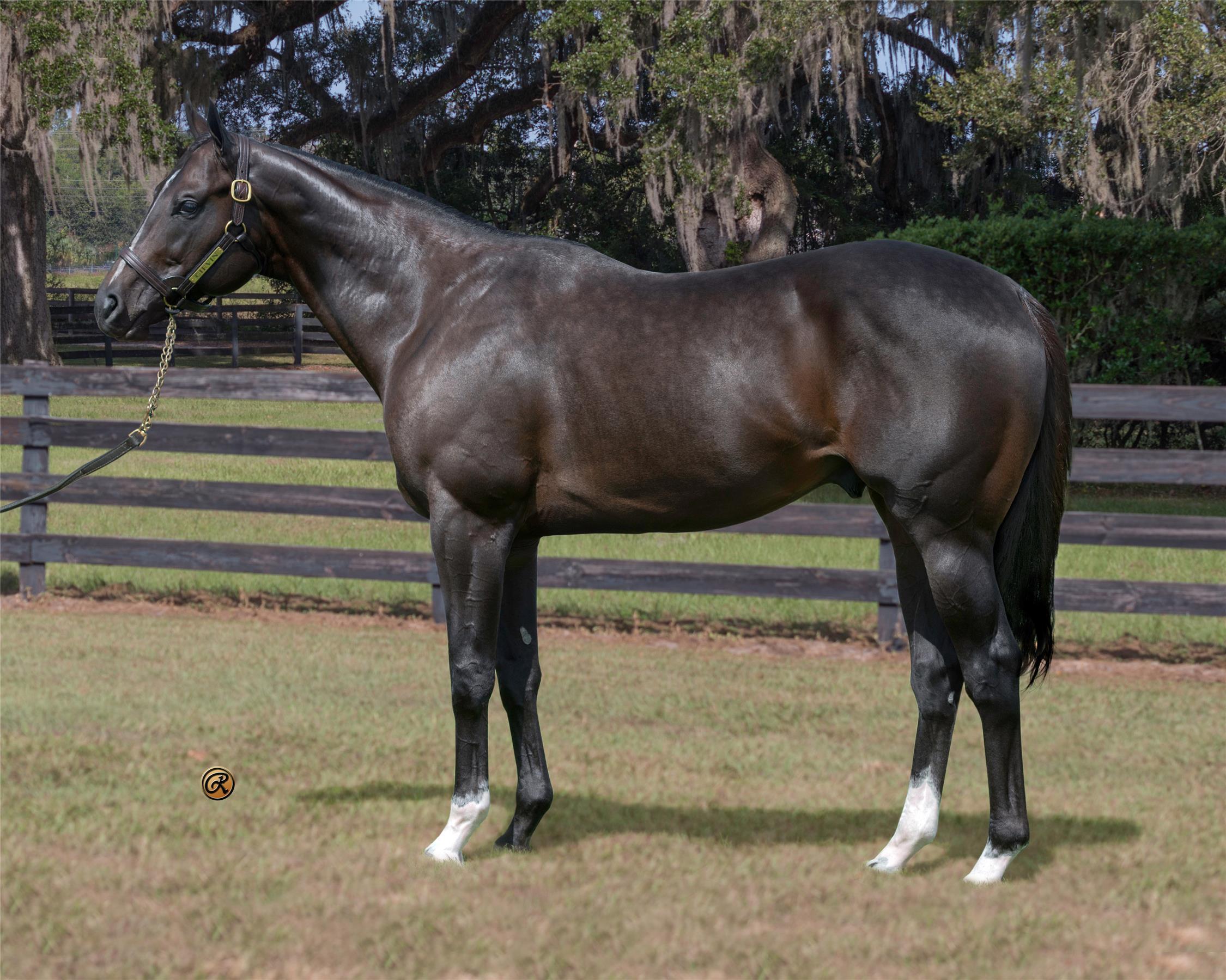 Ocala Stud Thoroughbred Stallion Farm