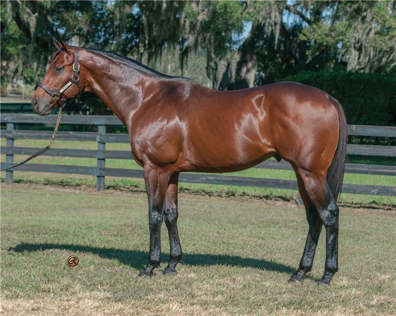 Four Runner For Sale >> The Big Beast - Ocala Stud Thoroughbred Stallion Farm